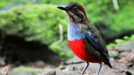 image du programme Destination Wild : Philippines - Paradis sauvage