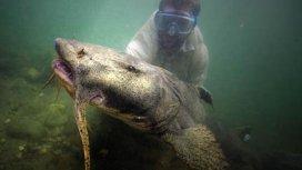 image du programme Betes de poissons : Le goonch géant