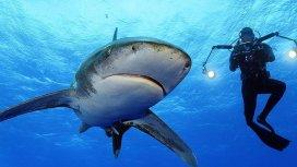 image de la recommandation Shark Vs Predator