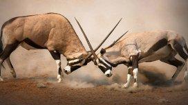 image du programme Animal Fight Club
