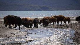 image du programme ALASKA : LA DERNIERE FONTIERE