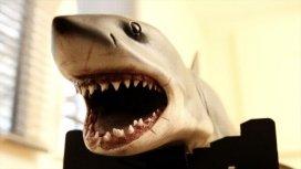 image du programme Les dents de la mer