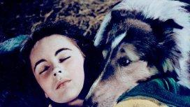 image du programme Le Courage de Lassie