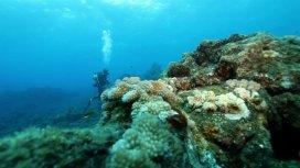image du programme La Réunion, le corail sous influence