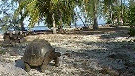 image du programme La tortue après l'eden