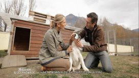 image du programme Hélène et les animaux