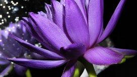 image du programme Au royaume des plantes