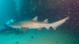 image du programme Shark man
