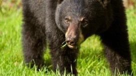image de la recommandation L'ourse noire et le bout du monde