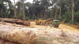 image de la recommandation Eden Vert : la guerre du bois