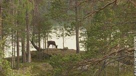 image du programme Sentinelles de la nature