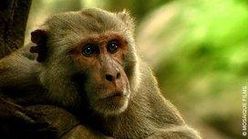 image du programme Primates des Caraïbes