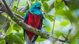 image du programme COSTA RICA, une arche de la nature
