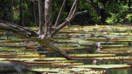 image du programme Aux sources de l'Essequibo