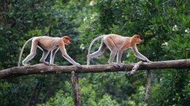 image du programme Les plus beaux parcs nationaux d'Asie