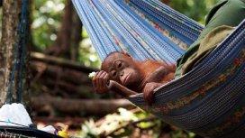 image du programme Borneo grandeur nature