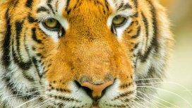 image du programme Shuklaphanta, l'autre Népal sauvage