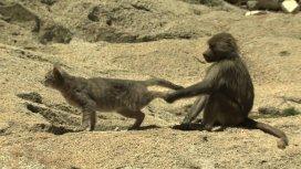 image du programme L'évolution en marche