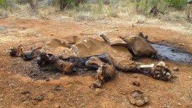 image du programme L'éléphant qui donna sa vie