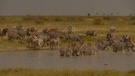 image du programme Terres sauvages en danger