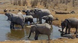 image du programme Afrique Extrême