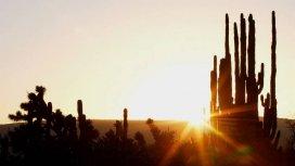image du programme Un matin sur Terre