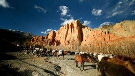 image du programme Mustang, un voyage hors du temps