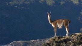 image du programme Parque Patagonia