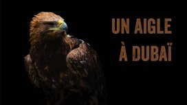 image du programme Un aigle à Dubaï