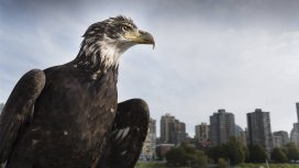 image du programme Un aigle dans mon jardin