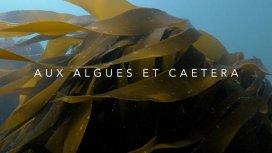 image du programme Aux algues et caetera
