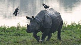 image du programme Les grands animaux d'Asie