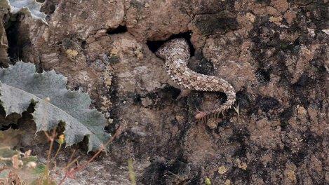 Alamto, un monde de reptiles