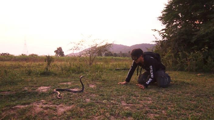 Le cobra cracheur d'Indochine