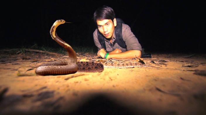 La redoutable vipère de Malaisie