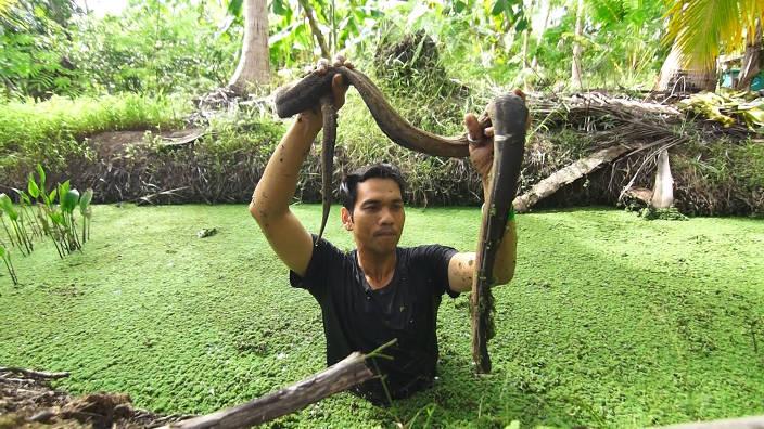 Le serpent verruqueux