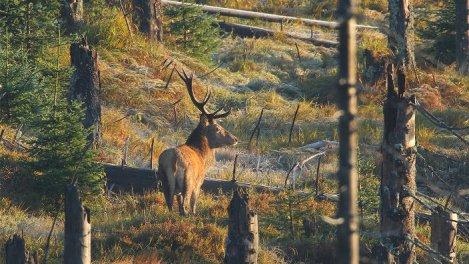 La forêt de Bavière : un joyau au coeur de