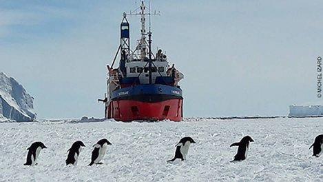 Terre Adélie, une vigie dans les glaces