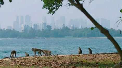 Singapour - La Jungle Urbaine