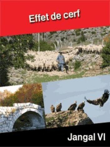 Effet de cerf : Parc National des Cévennes