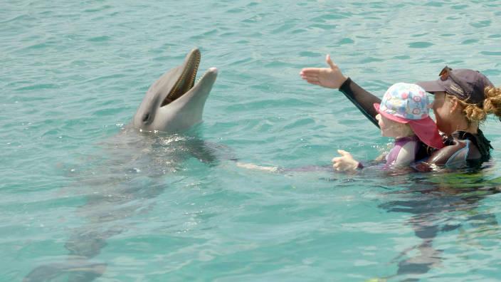 GEO Reportage - Curaçao, des dauphins