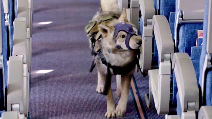 GEO Reportage - Moscou : les chiens renifleurs