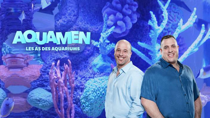 L'aquarium de david hasselhoff