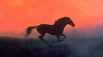 L'homme qui murmurait à l'oreille des chevaux