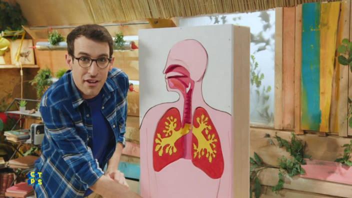 Les poumons / La respiration