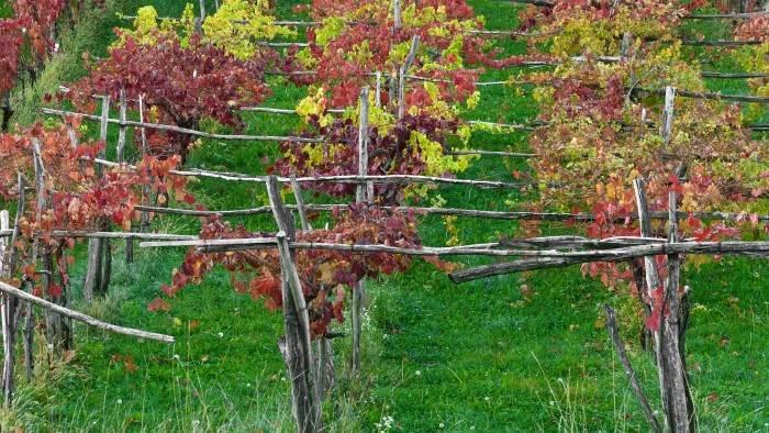 Image du programme Le vin en ébullition