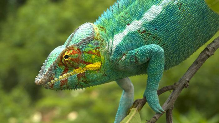Image du programme Madagascar