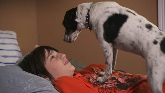 Image du programme Le chien vampire