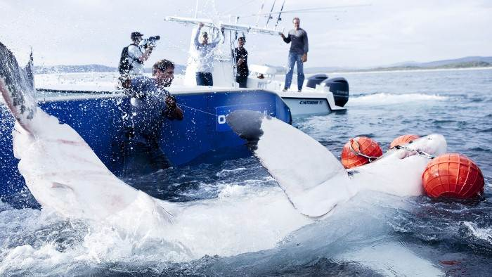 Image du programme Mission grands requins blancs