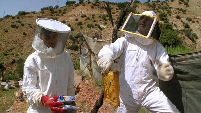 Image du programme Les secrets de la ruche